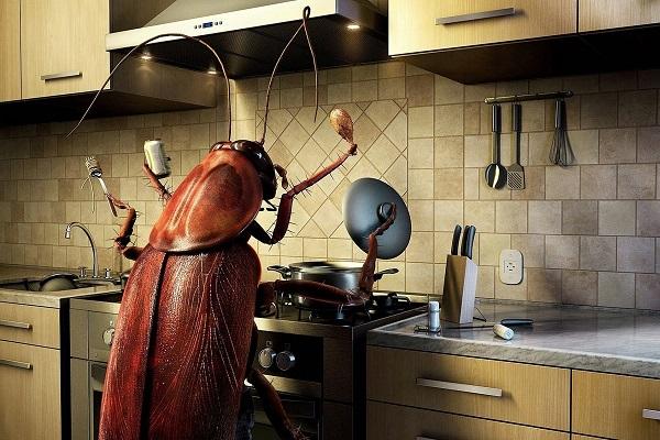 Как бороться с тараканами в домашних условиях в квартире?