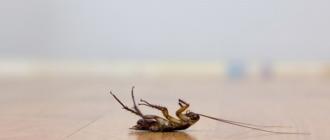 Мертвый таракан, попавший под действие эффективного средства