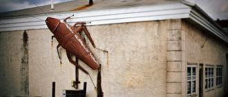 Таракан в частном доме