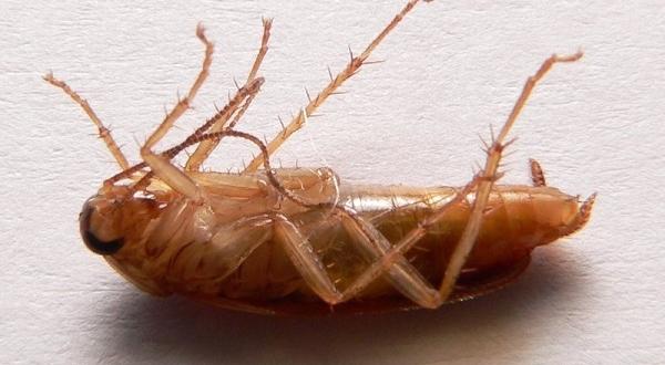 Ноги таракана