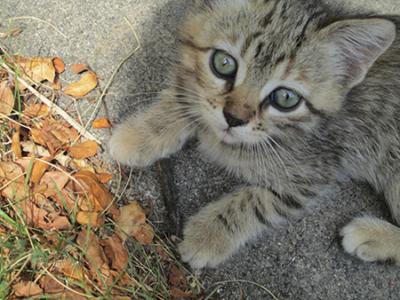 Лучшие средства для избавления от паразитов – как вывести блох у котенка?