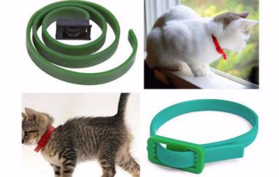 Блохи у кошки: что делать и как избавиться от блох домашних условиях