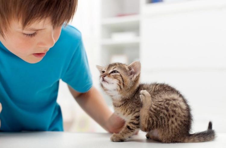 Блохи у кошки опасны для человека. Предупреждён, значит вооружён! Что переносят блохи
