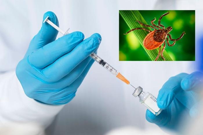 Прививка от клеща: схема вакцинации против энцефалита для ...